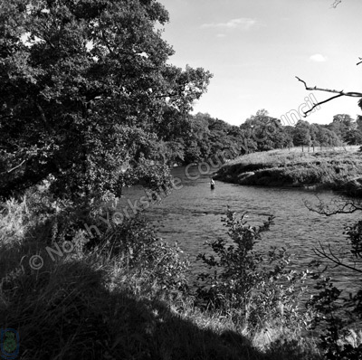 Fishing, River Ure, Kilgram Bridge